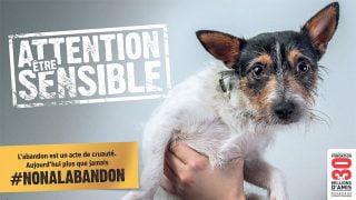 Campagne de sensibilisation par 30 millions d 'amis pour un grand Non à l'abandon