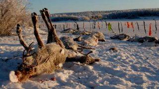 Des chasseurs canadiens abattent par erreur le traineau du Père Noël