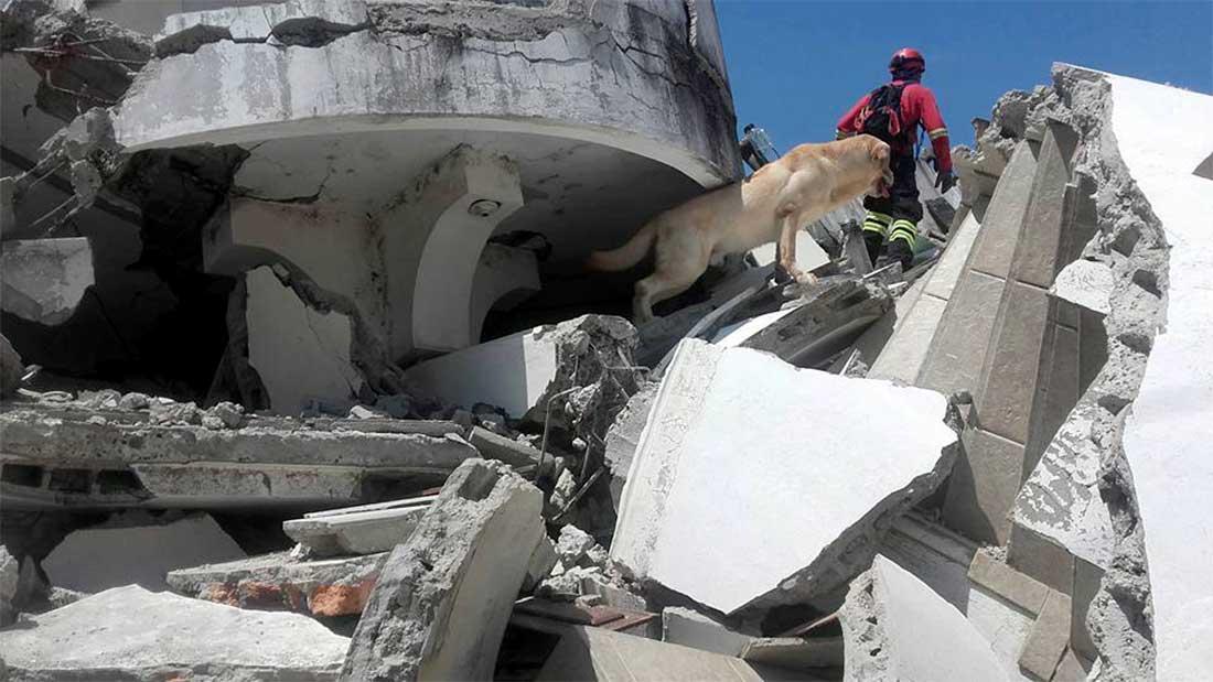 un chien sauveteur meurt d'épuisement apres avoir sauvé 7 personnes