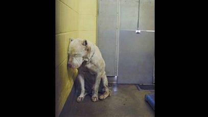 Bénévole désemparé. Solitude, stress, et tristesse pour les chiens des refuges.