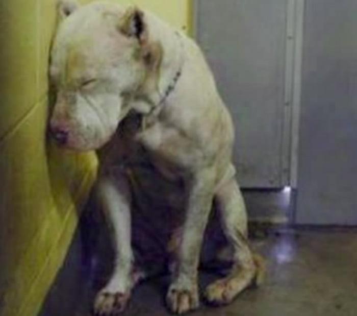 Solitude, stress, et tristesse pour les chiens des refuges.