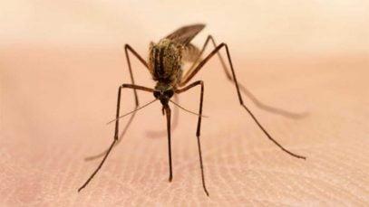 La télévision anti-moustique de LG