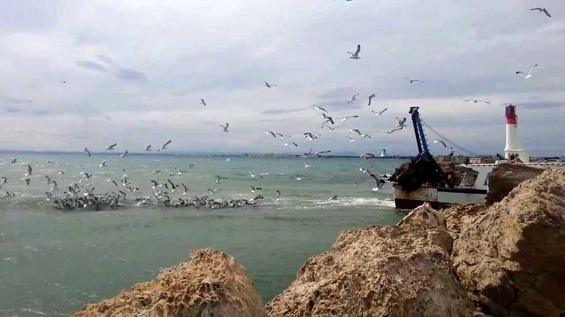 Bateau de pêche de retour au port du Grau du Roi