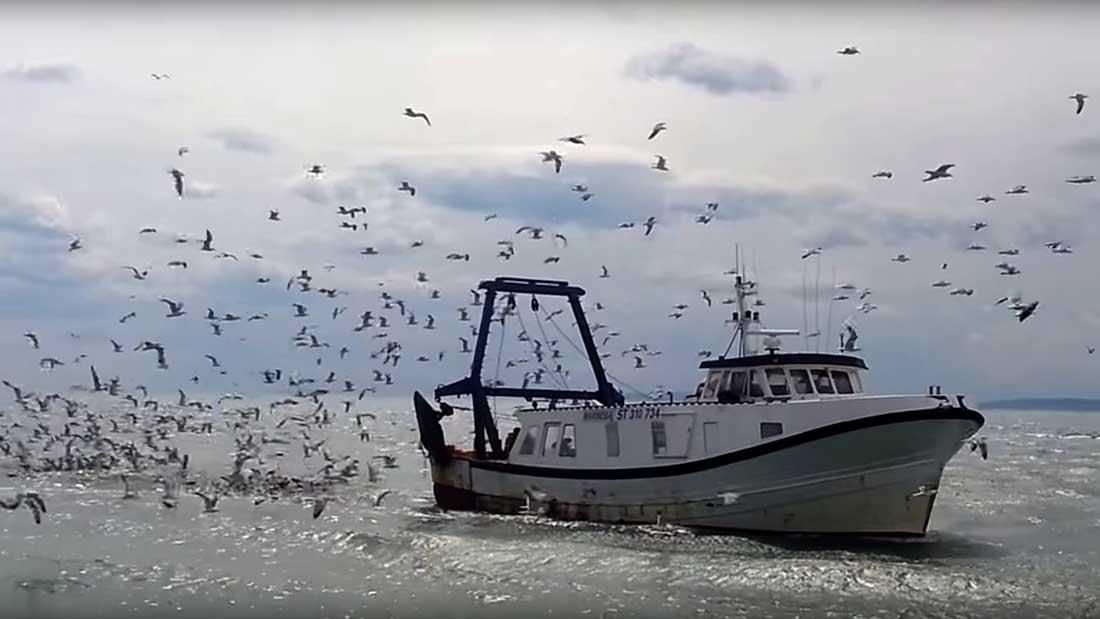 Bateau de pêche du Grau du Roi en Occitanie