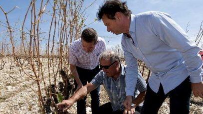 Grêle dévastatrice dans l'Hérault
