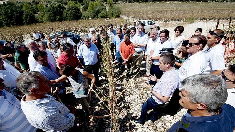 Réunion aux pieds des vignes Photo : D.Maugendre
