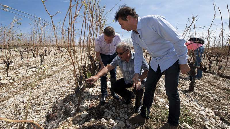 Jérôme Despey, président de la Chambre d'agriculture, René Moreno et Jean-Luc Bergeon constatent l'étendue des dégâts