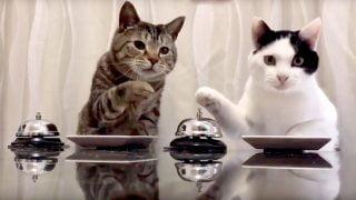 La meilleure vidéo de chats d'internet