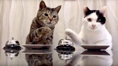Chats, sonnette et croquettes