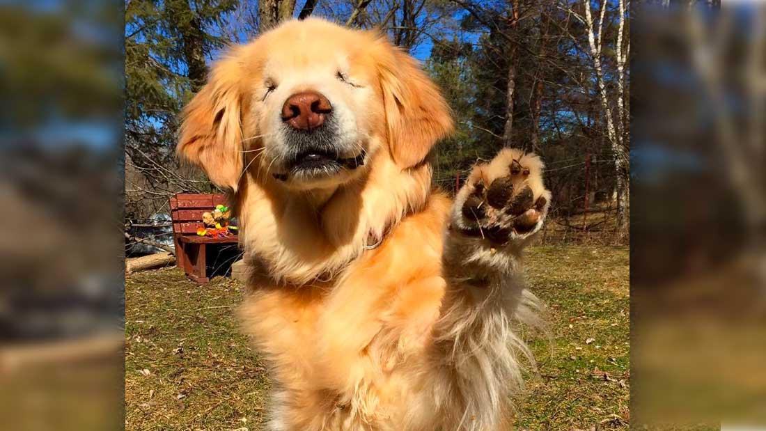 le-chien-smiley-donne-sa-patte