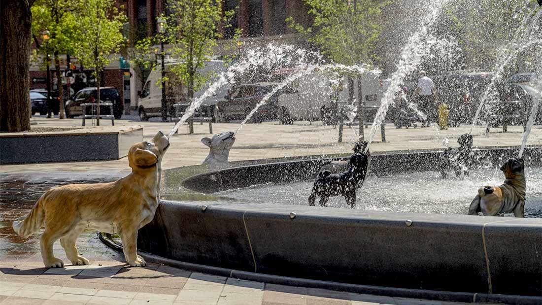 Une pétition est en cours pour dédier la statue du golden retriever au parc Berczy à Smiley.