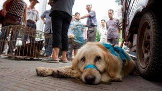 Suite au coronavirus, les autorités de Shenzhenau sud de la Chine ont déclaré que l'interdiction de manger des chiens et des chats entrerait en vigueur le 1er mai