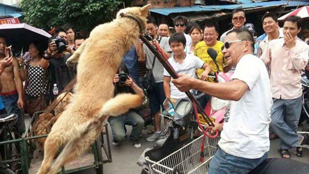 En chine, la souffrance animale amuse les passants avant de se mettre à table