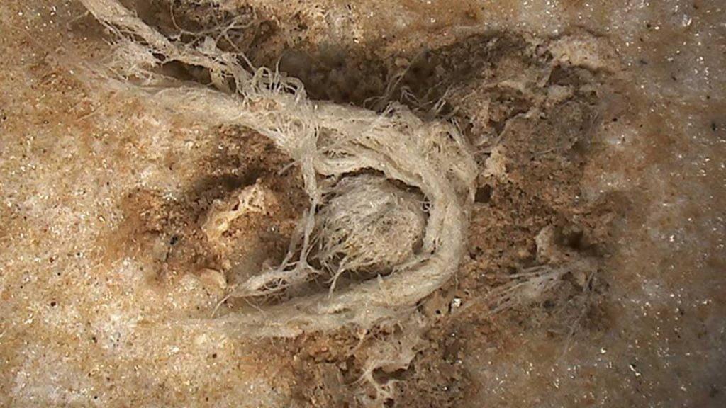 Ardèche : La plus ancienne corde au monde montre que l'homme de Néandertal était plus intelligent que nous ne le pensions 2