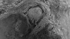 Fabriquée par l'homme de Neandertal, la plus vieille corde au monde aurait 40 000 ans et constituerait  la plus ancienne preuve de technologie textile connue à ce jour